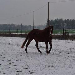 Handria im Winter 2018/2019 in der Freiarbeit