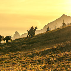 Gitzi mit dem Ziegenpeter vor einer herrlichen Bergkulisse