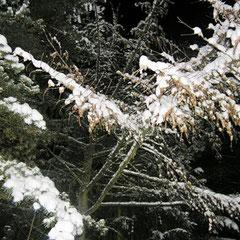 Gartenimpressionen Winter 2010 bySKB
