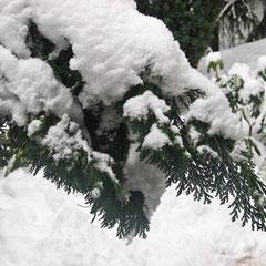 Bizarre Gestalten - Winter im Garten - Foto by SKB 01/2010