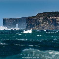 Costa malvinense, Sea Lion Island.