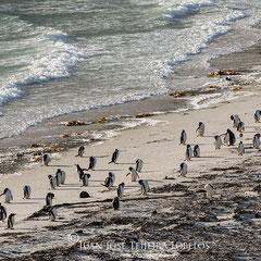 Pingüinos en la playa.
