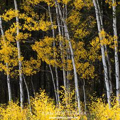 Otoño canadiense. Wood Buffalo National Park.