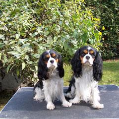 Babette mit Bruder Benito