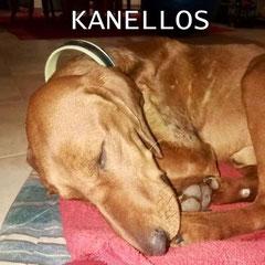KANELLOS