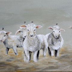 Schafe zählen 2, 30 x 20 cm