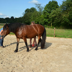 Paardencoaching teamcoaching