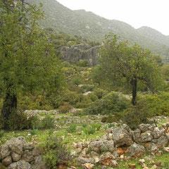 Habitat van Luschani's landsalamander.