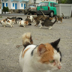 Abundantie van straatkatten.
