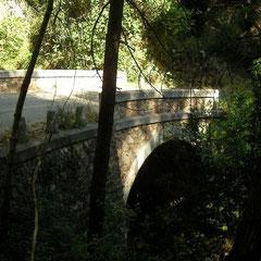 Habitat van Andalusische kielhagedis (Algyroides marchi)