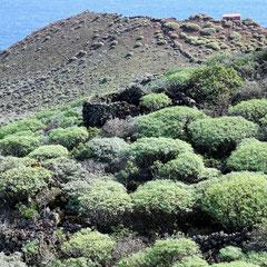 Hinter der Hausruine an der Abbruchkante blickt man steil hinunter zum Malpais (Lavafeld) bei Tamaduste.