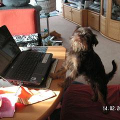 Könnte ja mal schnell die Löschtaste auf Herrchens Laptop drücken ( hi hi hi )