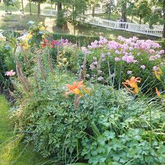 Blumen von einenem Ausflug nach Peterhof