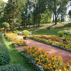 Blumen von einem Ausflug von Sankt Petersburg nach Peterhof