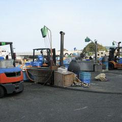 港ではカメ・コンブの陸揚げします
