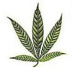 Zink Mangel Cannabis Frühes Stadium