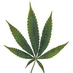 Kupfermangel cannabis frühes Stadium