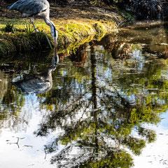 D_No.06_Reflections at Botanic Gardens