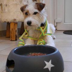 Ernie beim 1. Geburtstag - ja, es ist derselbe Hund :))