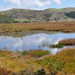 池に映る・八島湿原
