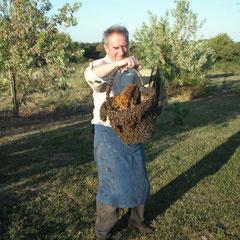 François Beaugey & les 10000 abeilles ! - saison 2009