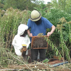 Petit apiculteur deviendra grand ! - saison 2009