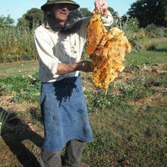 Une superbe ruche sauvage - saison 2009