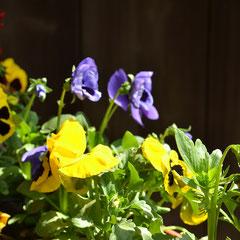 Rita's Blumen