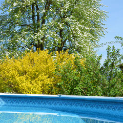 Garten mit Swimming-Pool