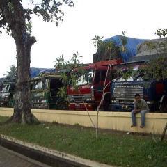 盗伐材運搬で検挙されたトラック