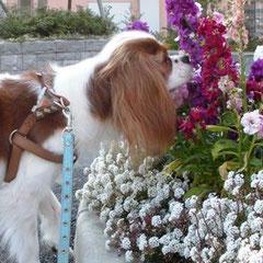 誰とでも仲良し、お花の精とも