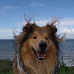 Der Wind zerstört meine Frisur