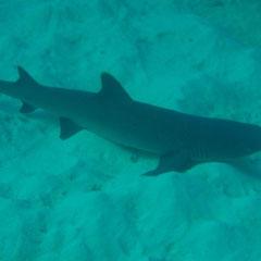 unser erster Hai