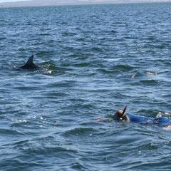 dann ging es ins Wasser zu den Delfinen