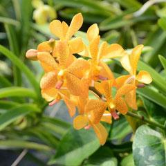 Orchideenfarm