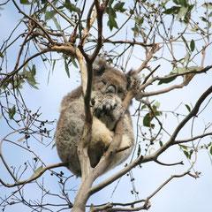 hier noch einige Tiere im Tower Hill National Park