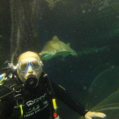 im Becken mit den Haien