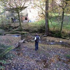 Schluchtenwanderung zum Ebnisee - Natur pur - die nächsten Bilder sprechen alle für sich!