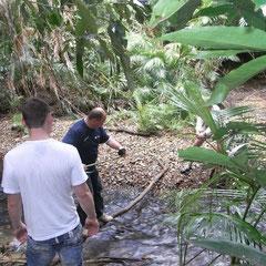 und los ging es in den Regenwald