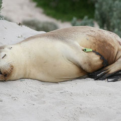 Im Seal Bay Conservation Park