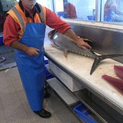 ein Thunfisch wird verarbeitet