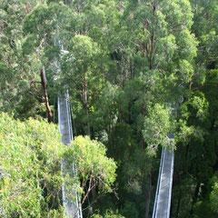 Stege über den Bäumen