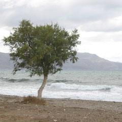 am Strand unterhalb der Villa