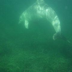 mit der Unterwasserkamera beim Schnorcheln fotografiert