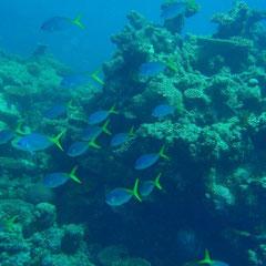 Hier noch ein paar Eindrücke vom Great Barrier Reef
