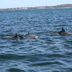 ganz nah dran an den Delfinen