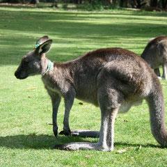 die wir in Australien sahen