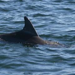 ..........plötzlich kamen die ersten Delfine