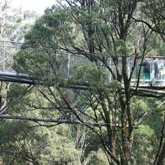 Aussichtsplattform über den Baumkronen
