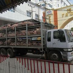 Schweinetransport auf Asiatische Art